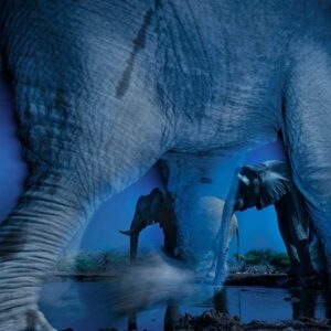 top professional wildlife photographers - this elephant photo won the wildlife photographer of the year contest