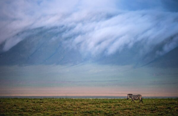 fine art wildlife photography - Crater Wanderer