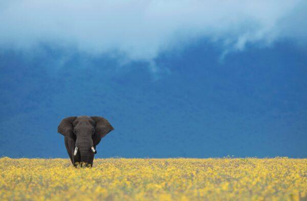 fine art wildlife photography - Field of Dreams
