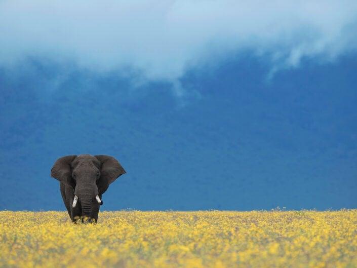 Africa's Eden