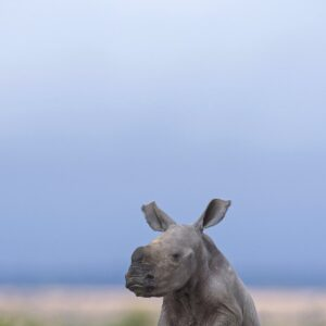 african wildlife photography - Taking a Load Off