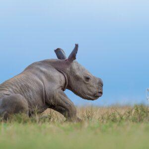 african wildlife photographer - Taking A Break