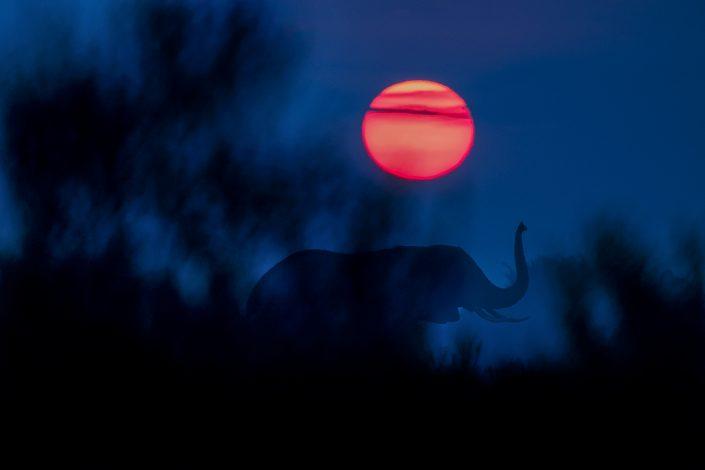 Africa wildlife photography - Elephant Sunrise