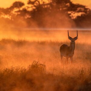 A Misty Morning - This animal scene photo was taken in Zambia's Kafue National Park.