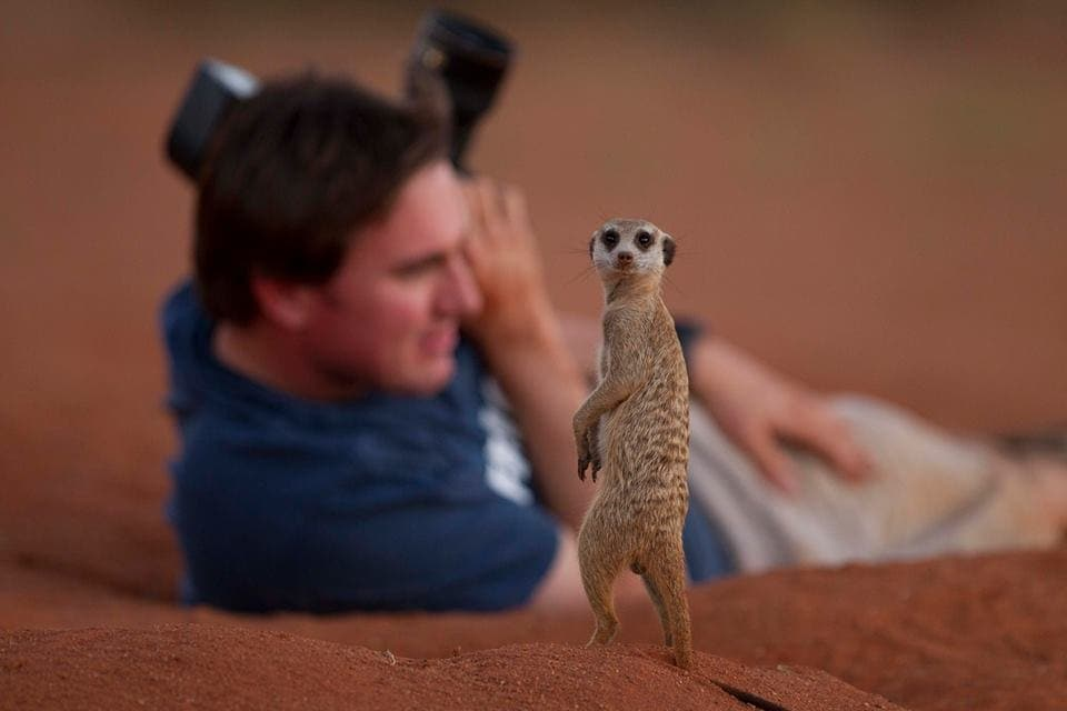 african wildlife photographer - greg du toit