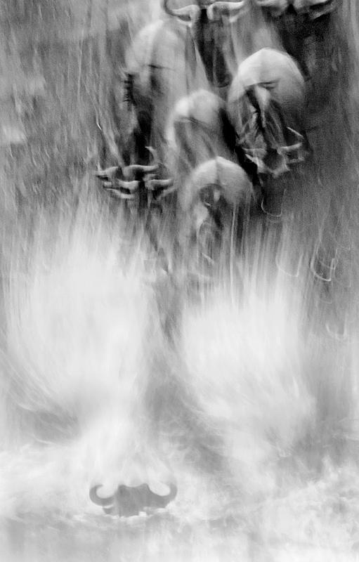 great migration photography safari - wildebeest river crossing