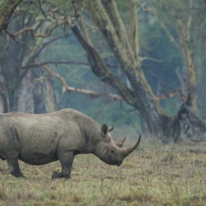animalscapes - Forest Rhino