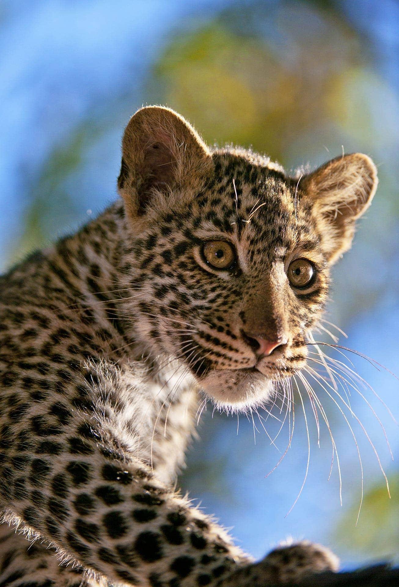 best africa photo safari - leopard cub