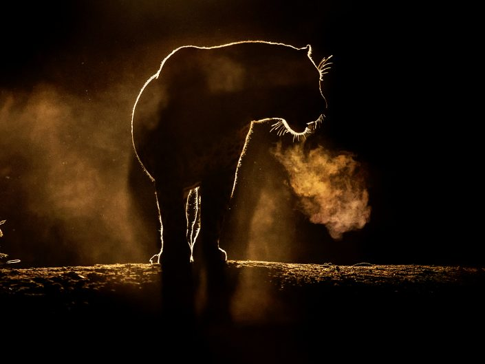 Botswana & South Africa Predator Workshop