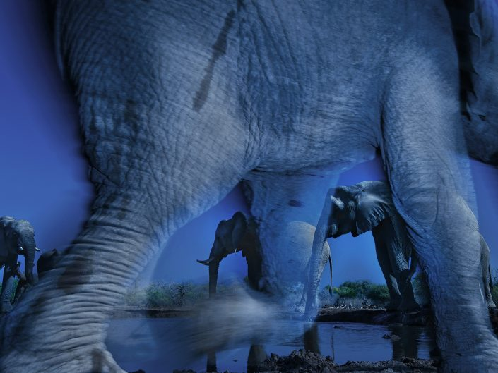 Africa photo safari - essence of elephants