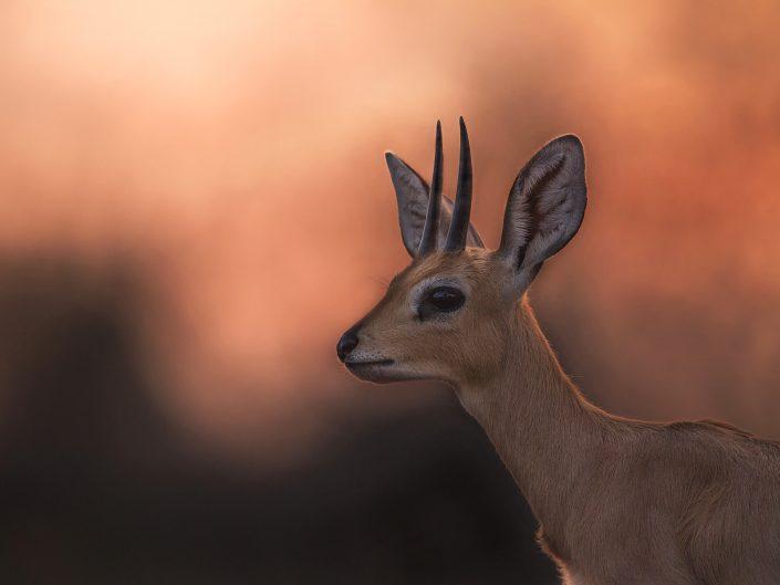 best african photography safari tours - steenbuck
