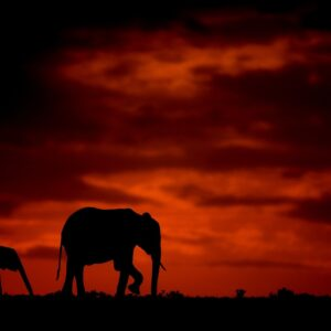 elephant silhouette - Elephant and calf