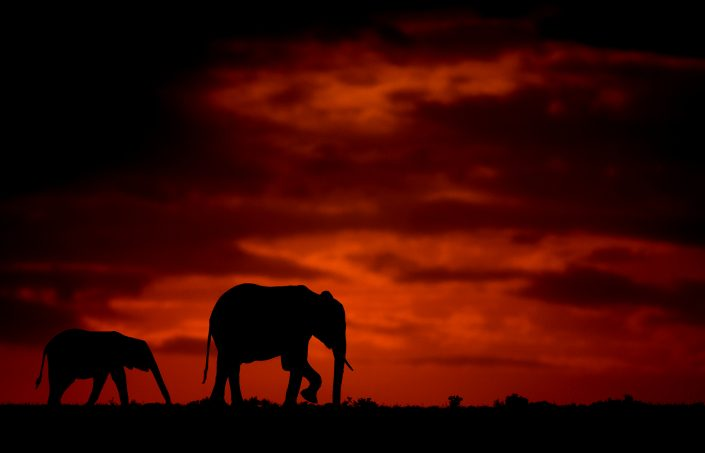 elephant silhouette - Elephant and calf