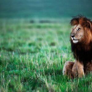 Notch - African wildlife fine art photography by award winning African wildlife photographer Greg du Toit.