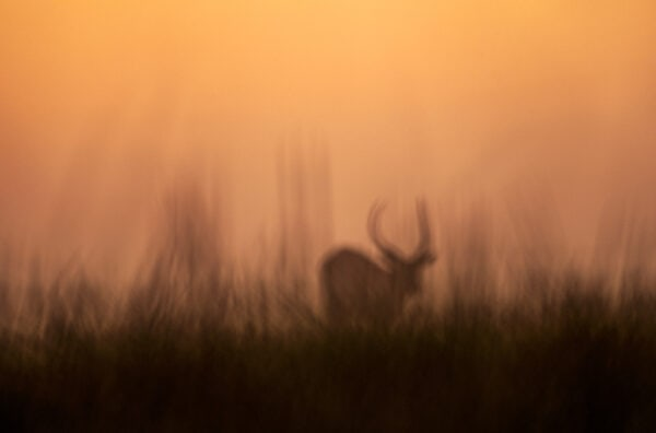 creative wildlife photography - Disappearing Lechwe