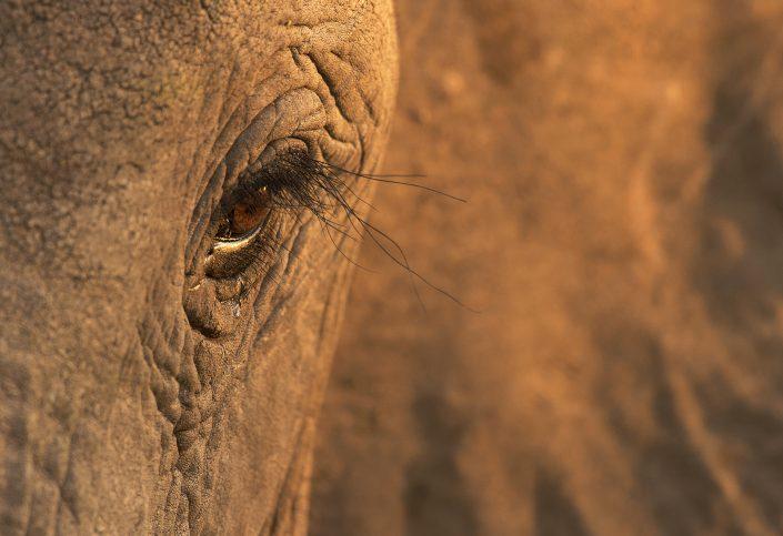 south africa photography safari - elephant eye