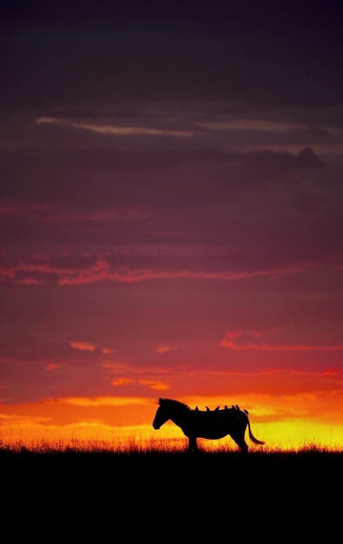 Masai Mara photo safari - zebra silhouette