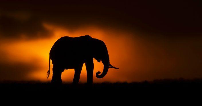 Amboseli photo safari - elephant