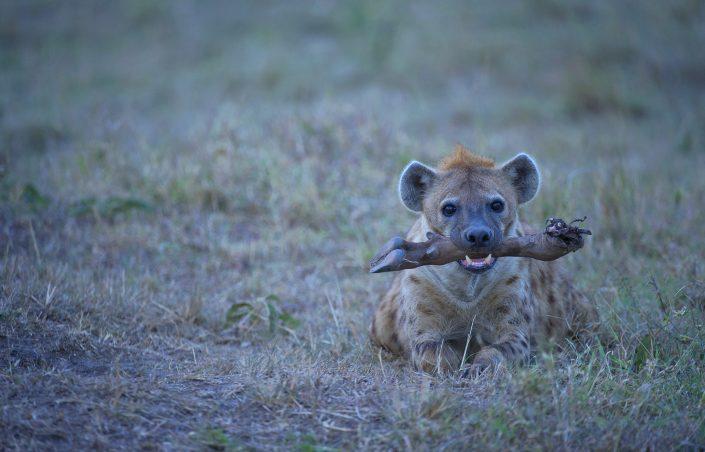 Masai Mara photo safari - hyena