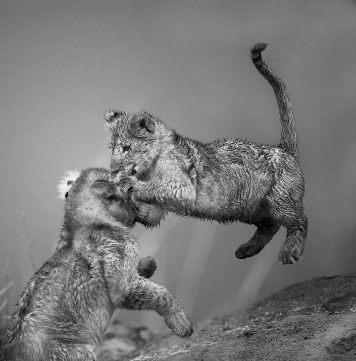 Kenya photo safari - lion cubs