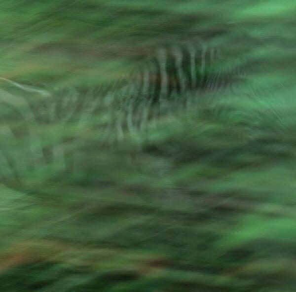 creative wildlife photographers - Zebra Impression