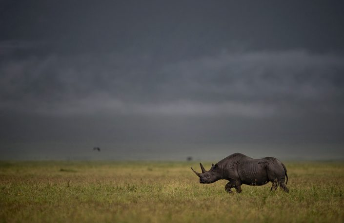 Africa's top safari park