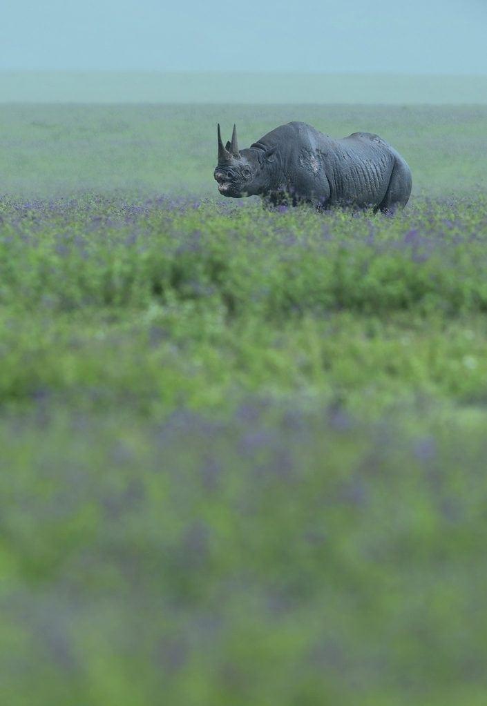 tanzania wildlife photography tours, black rhino