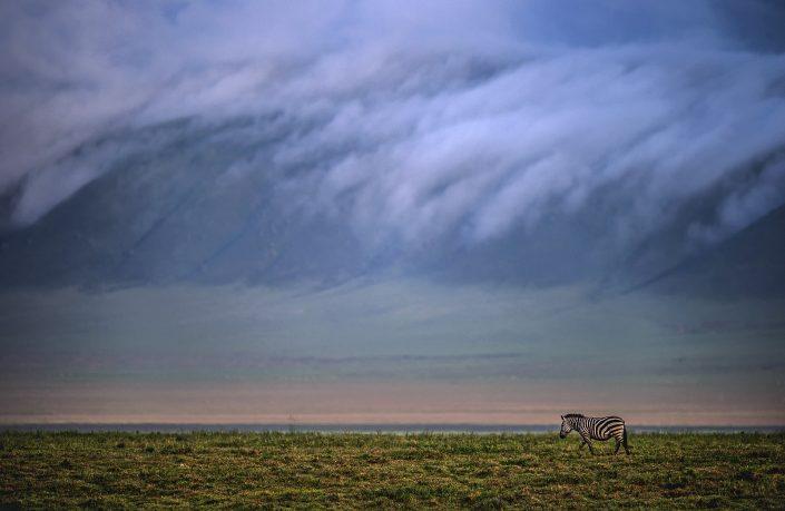 Ngorongoro Crater photo safari, zebra