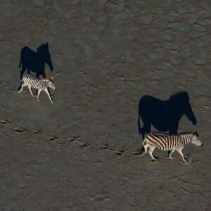 african wildlife photography - zebras