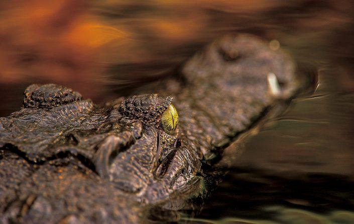 best luxury African photo safari - a photograph from the Okavango Delta