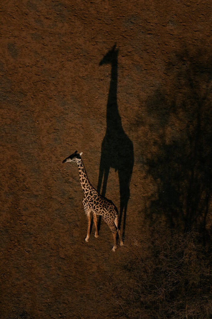 avant-garde wildlife photography