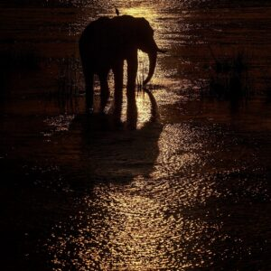 wildlife silhouette photography - Mana Crossing
