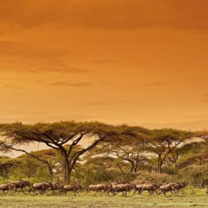 Serengeti Migration - Animal environment photography by African wildlife photographer Greg du Toit.
