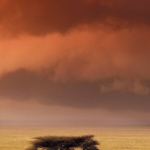 Serengeti Elephant - An African wildlife print by master photographer Greg du Toit.