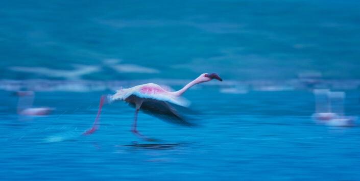 flamingo photo safari