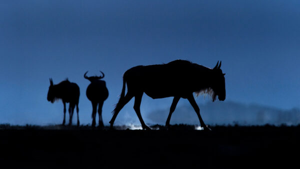 creative wildlife photography by African wildlife photographer greg du toit