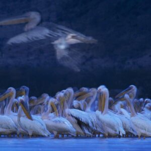 best wildlife photographers on instagram - greg du toit has placed 7 times in the wildlife photographer of the year