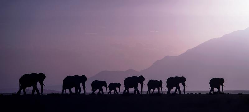 Best amboseli photo safari - herd of elephants