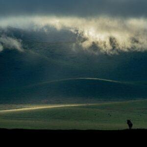ngorongoro crater photo safari, wildebeest