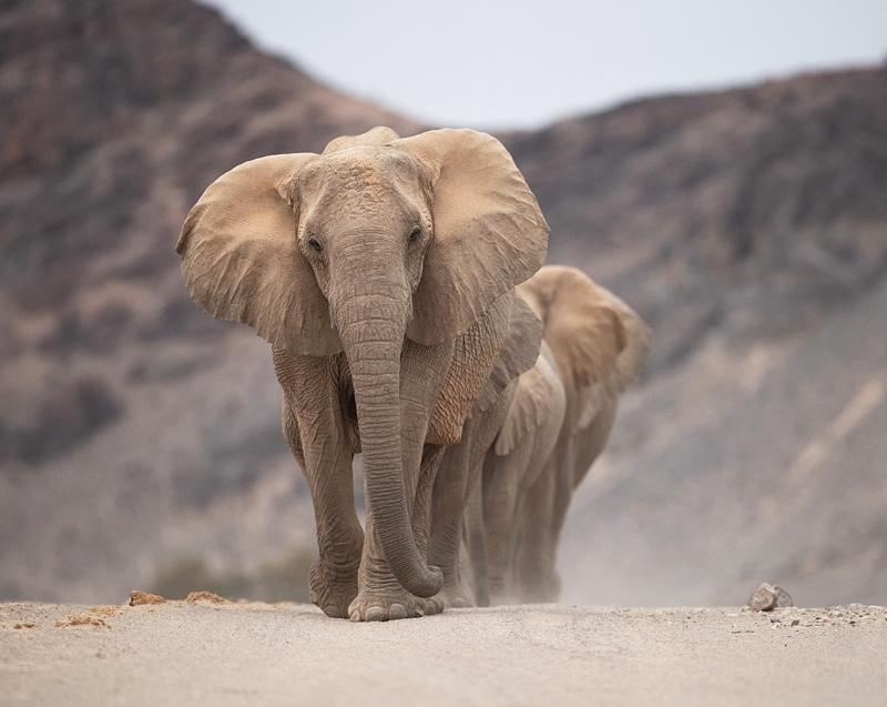 best namibia wildlife photo safari - desert elephants