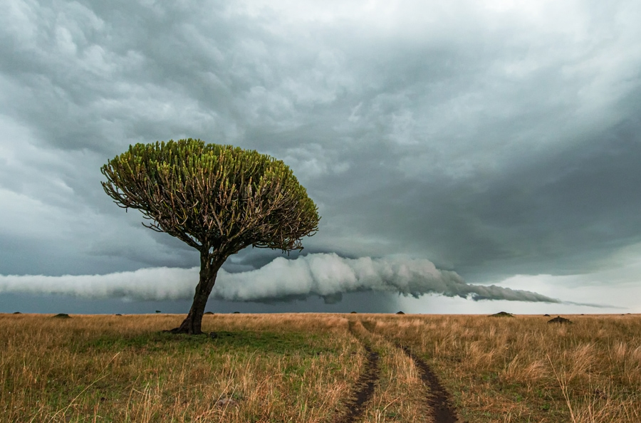Africa wildlife photography tour - storm