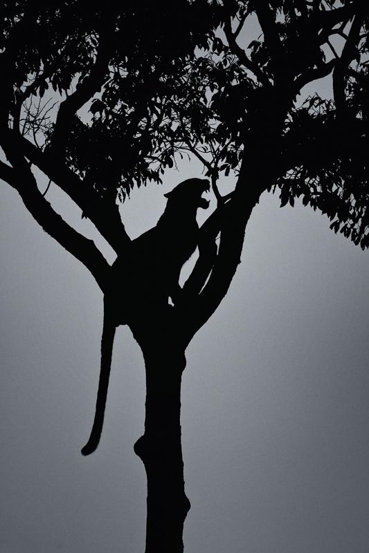 maasai mara migration photo safari