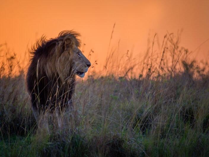 Masai Mara Predator Safari