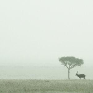 Waterbuck Plain - Africa wildlife fine art photography
