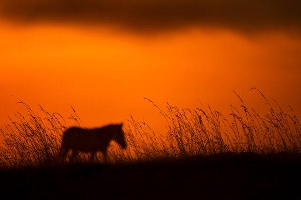 creative wildlife photography - Zebra Plains