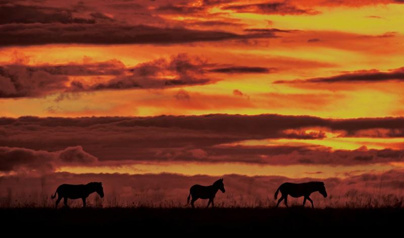 africa wildlife photography safari