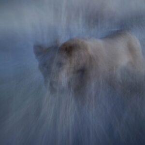 Painterly Portrayal - motion blur photography