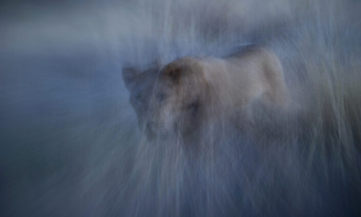 Painterly Portrayal - motion blur photography