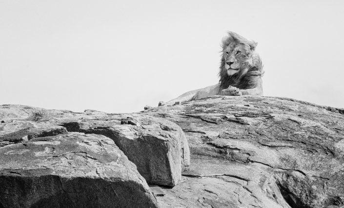serengeti photo safari, lion on rock