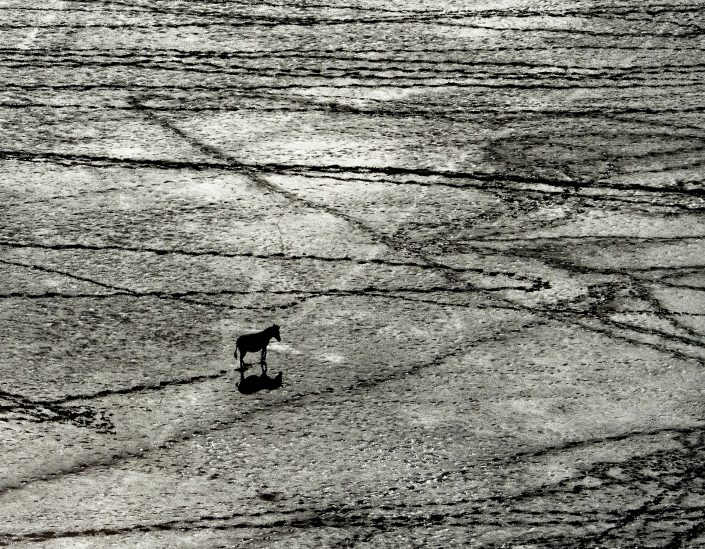Criss-Crossed Zebra - black and white animal photography prints